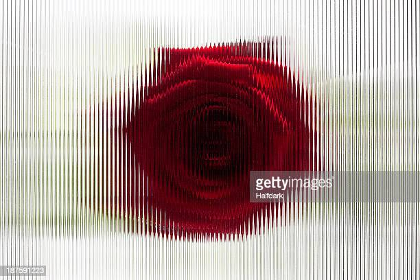 A rose seen behind beveled glass with striped pattern