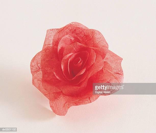 Rose, tissue paper