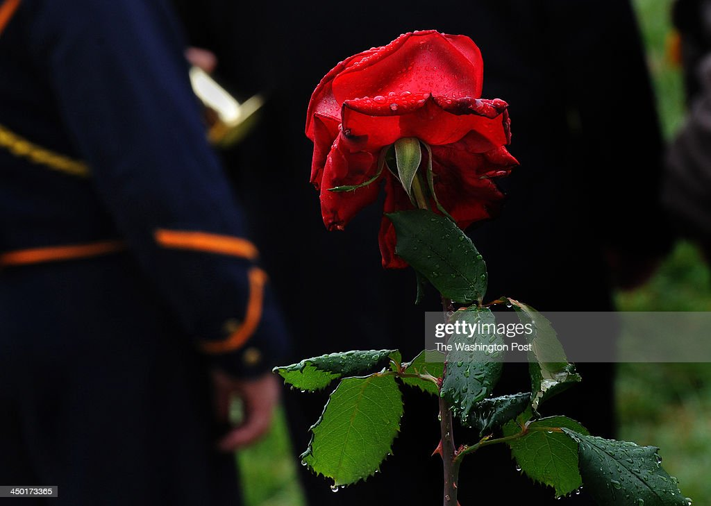 A rose (part of a whole garden of roses) with rain on it from an early morning mist surrounded the buglers as they assembled before the performance. Over 100 buglers participated in 'A Bugle Call Remembered: Taps at the Funeral of President John F. Kennedy,' at Arlington National Cemetery today. The buglers from over two dozen U.S. states converged to participate in the event to honor the 50th anniversary of the funeral for JFK. They met up as a group at the Old Amphitheater early in the day and played together before spreading out over various spots on the grounds at 12:00 noon so as to play taps in unison for all of the citizens buried there.