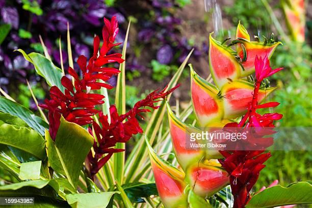 Roseau, Dominica, tropical flowers