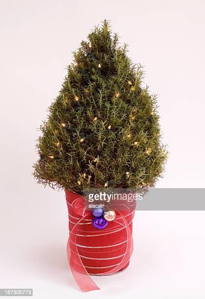 Rosemary Bush Christmas Tree