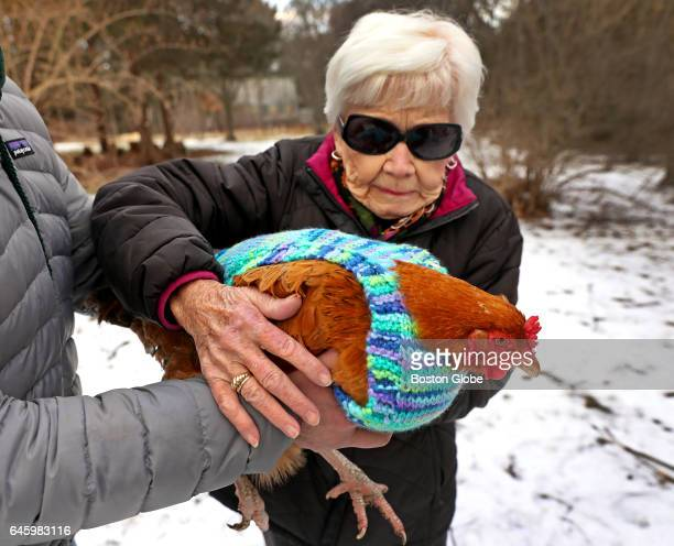 Rosemary Gelep learns how to hold a chicken in Newton MA on Feb 2 2017 A group of women knitters from the Fuller Village housing complex have knitted...