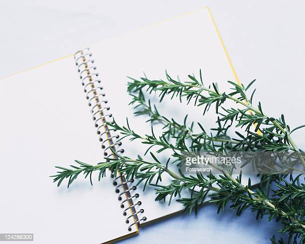 Rosemary on a Notebook, High Angle View