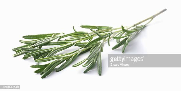 Rosemary on a white background