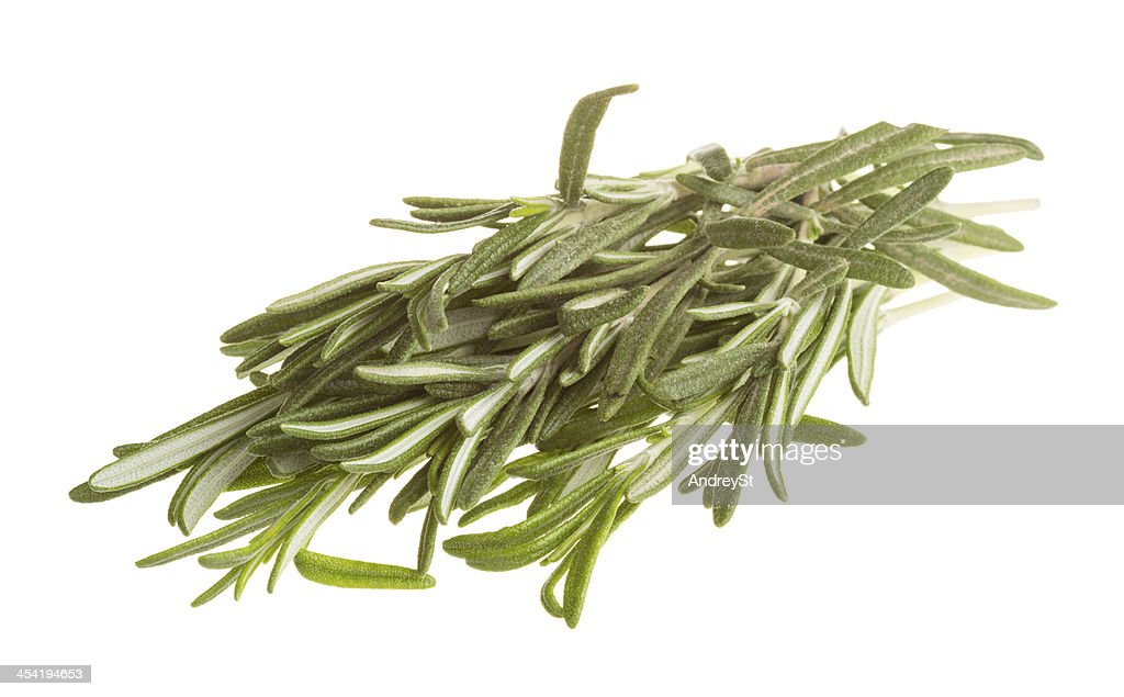Rosemary : Stock Photo