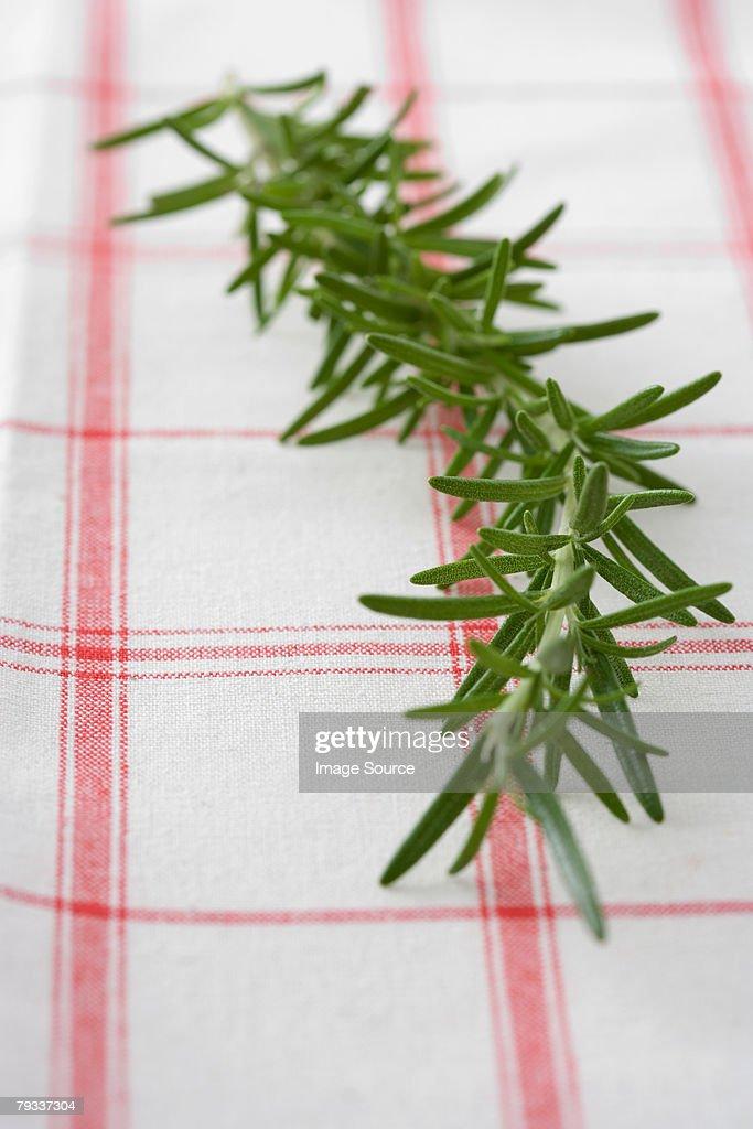 Rosemary : Stock Photo