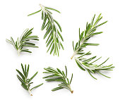 Rosemary twig on a white background
