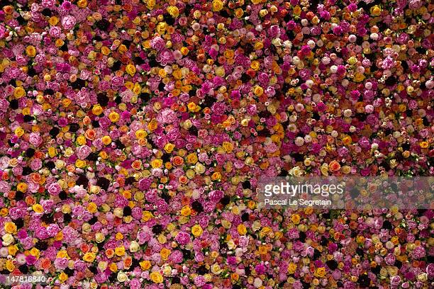 Roses are displayed at the Christian Dior HauteCouture show as part of Paris Fashion Week Fall / Winter 2013 on July 2 2012 in Paris France