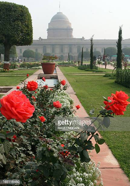 Roses are the centre of attraction in the Mughal Gardens at Rashtrapati Bhawan The Presidential Palace in New Delhi on February 6 2009 The 15 acre...