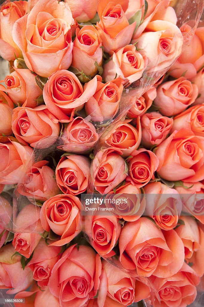 Roses for sale in a florist : Stock Photo
