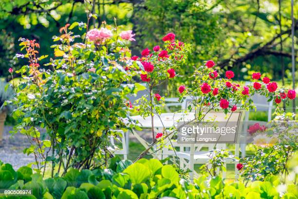Roses in a Peaceful Garden in France