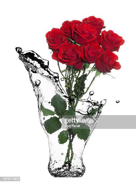 Roses in a water vase