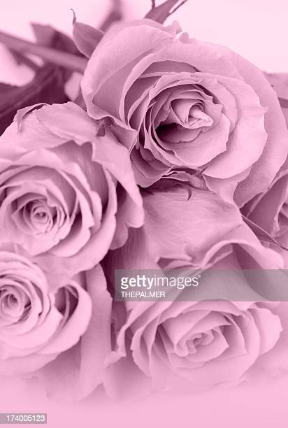roses pink toned