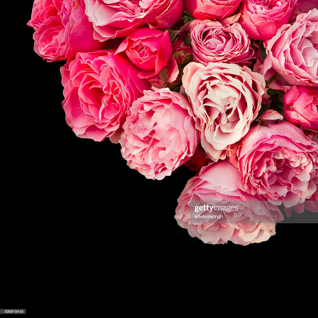 Roses with black empty space : Stock Photo