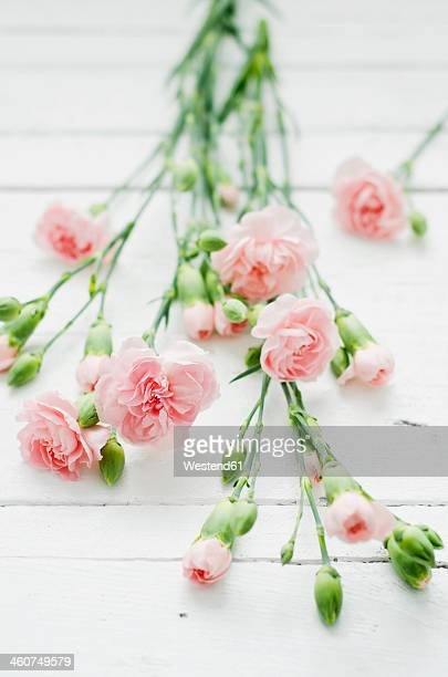 Rosy dianthus flowers on wooden table, close up