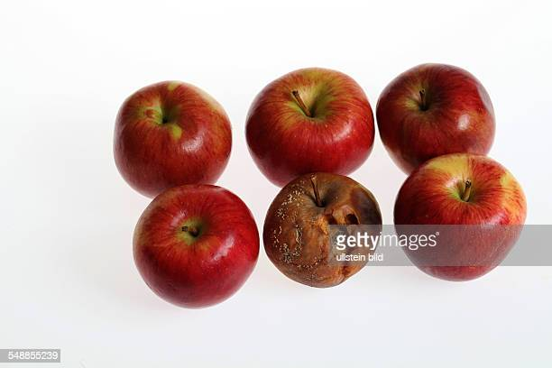rotten apple among good fruits