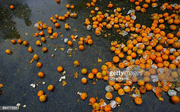 Rotten tangerines are dumped by wholesalers at Beijing's Xinfadi wholesale fruit market where retail customers remain reluctant to buy despite...