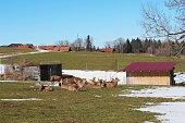 Rotwild, Weide, Schnee, Frühling