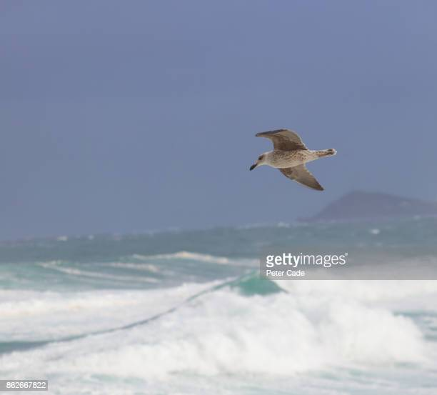 Rough sea and seagul