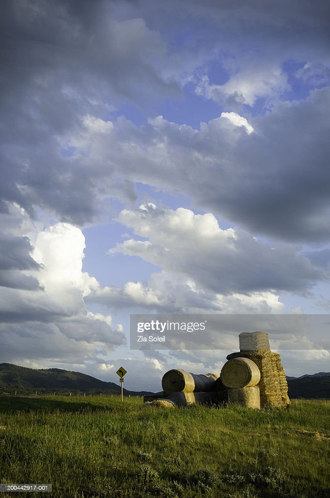 Round bales of hay in field, summer, sunset : Stock Photo