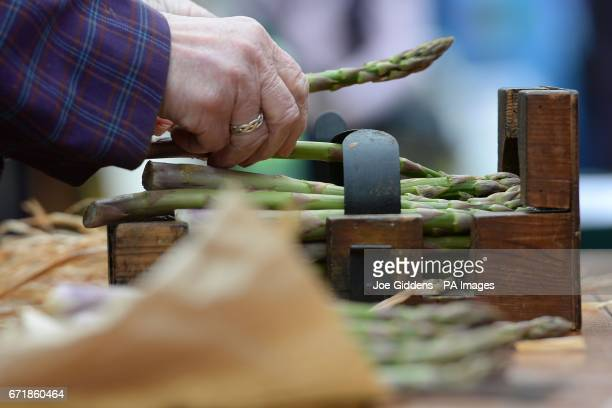 Rounds of asparagus are tied as people celebrate St George's Day and the official start of the asparagus season at the The Fleece Inn in Bretforton...