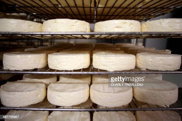 Rounds of French Camembert cheese are pictured in a drying room at the IsignySainteMere dairy cooperative in IsignysurMer northwestern France on...