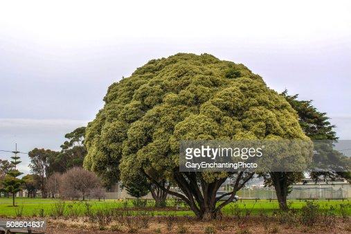 Redondo con forma de árbol : Foto de stock
