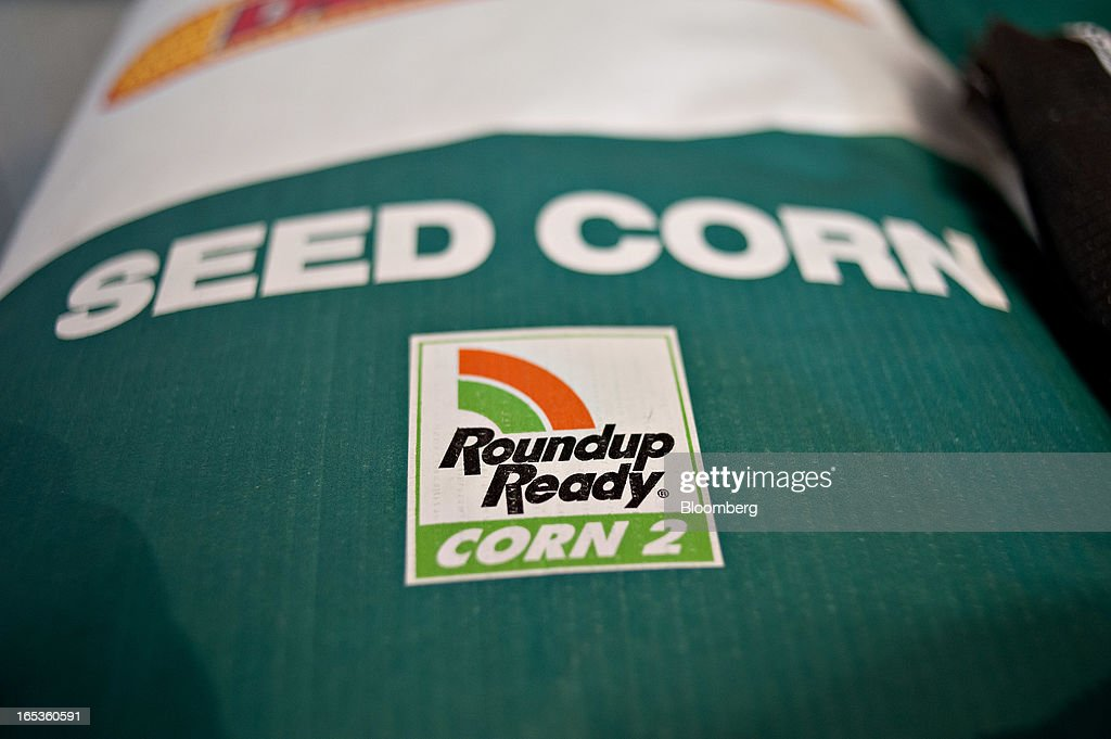A Roundup Ready Corn 2 logo appears on a bag of Monsanto Co. DeKalb brand seed corn on a farm in Princeton, Illinois, U.S., on Wednesday, April 3, 2013. Monsanto Co., the world's largest seed company, raised its full-year earnings forecast and posted fiscal second-quarter profit that beat analysts' estimates as sales of corn seed and Roundup weed killer climbed. Photographer: Daniel Acker/Bloomberg via Getty Images