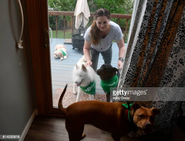 Rover Sitter Hailey Colebank has her hands full with four dogs from left to right Linus Zola her dog Summit and Lucy at her home July 12 2017 in...