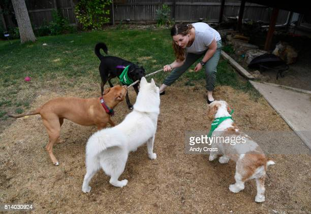 Rover Sitter Hailey Colebank plays with four dogs from left to right her dog Summit and dogs she sitting Lucy Zola and Linus in the backyard of her...