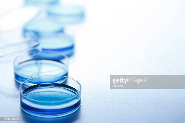Row of blue petri dishes