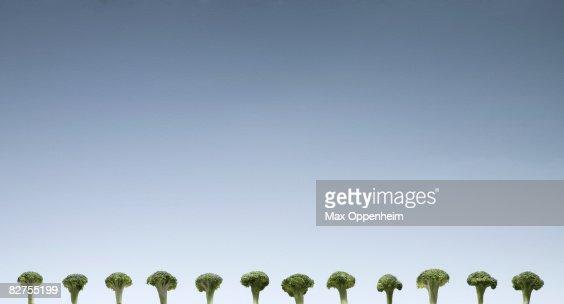 row of broccolli florets against a blue sky : Stock Photo