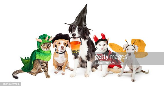 Row of Cats and Dogs in Halloween Costumes : Stock Photo