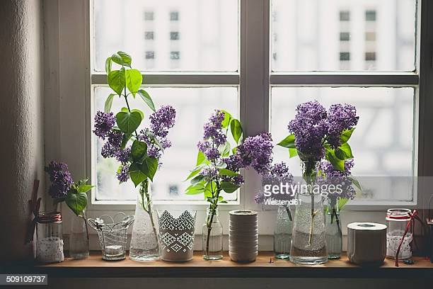 Row of different vases with lilac, Syringa, on window sill