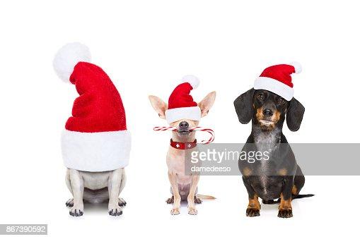 fila de perros en vacaciones de Navidad : Foto de stock