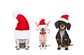 christmas  santa claus row of dogs isolated on white background,  with   funny  red holidays hat  and candy stick