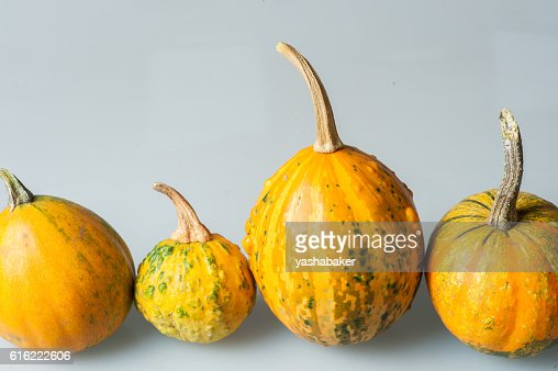 Row of four various organic gourds of decorative pumpkins : Stock Photo