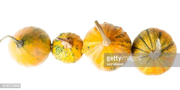 Row of four various organic gourds of decorative pumpkins : ストックフォト