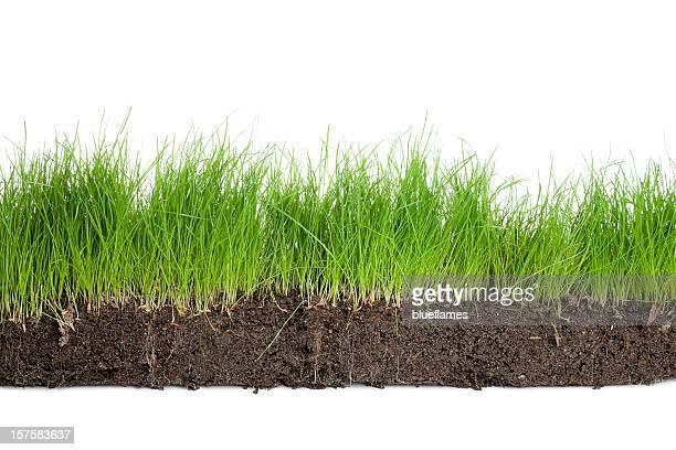 row of grass