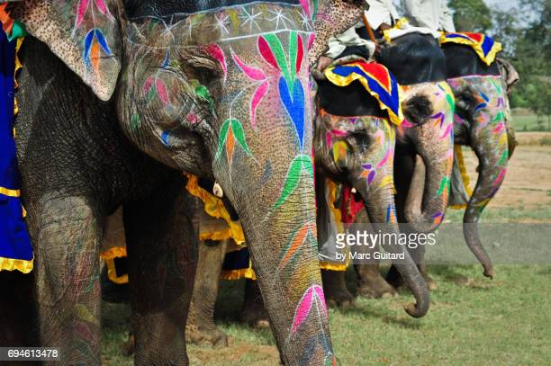 A row of intricately decorated elephants at the Elephant Festival, Jaipur Elephant Festival, Rajasthan, India