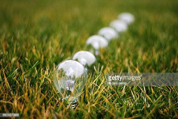 Row of light bulbs on a green lawn