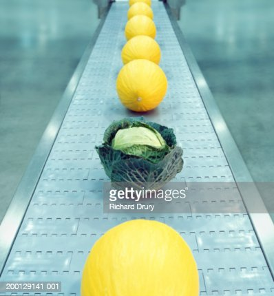 Row of melons on conveyor belt punctuated by single cabbage