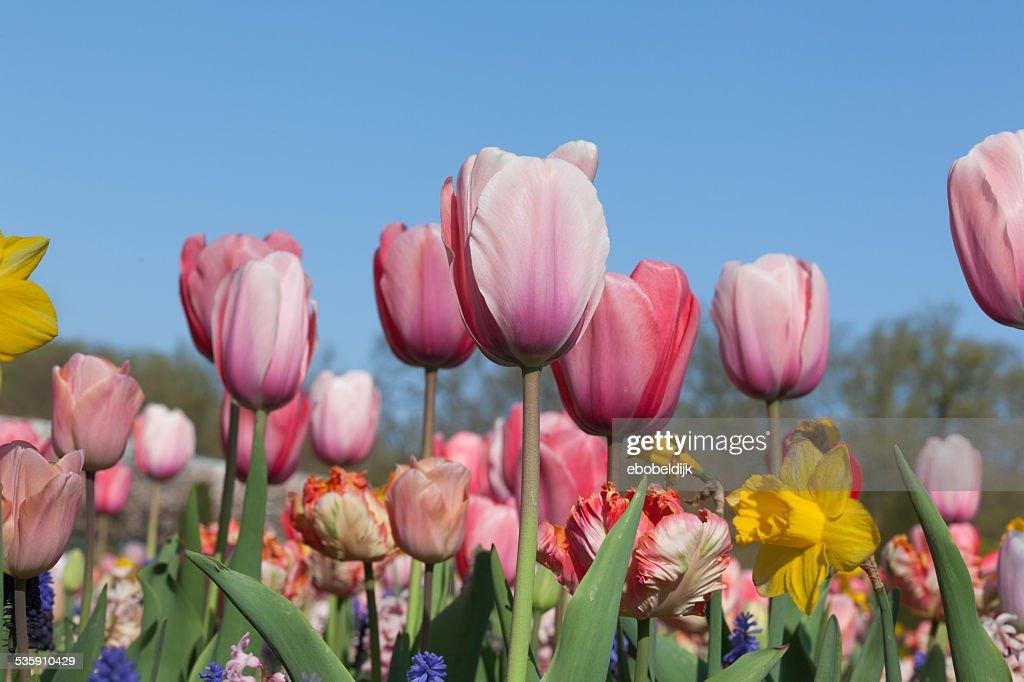 Fila de varias flores de colores : Foto de stock