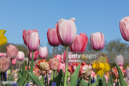 Row of multiple colored flowers : Stock Photo