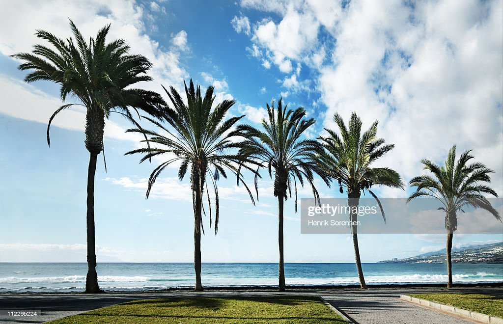 Row of palm trees of various height by beach