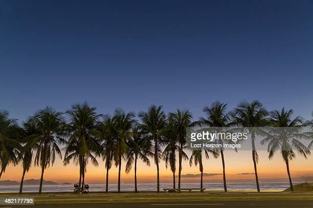 Row of palm trees on Copacabana beach, Rio De Janeiro, Brazil