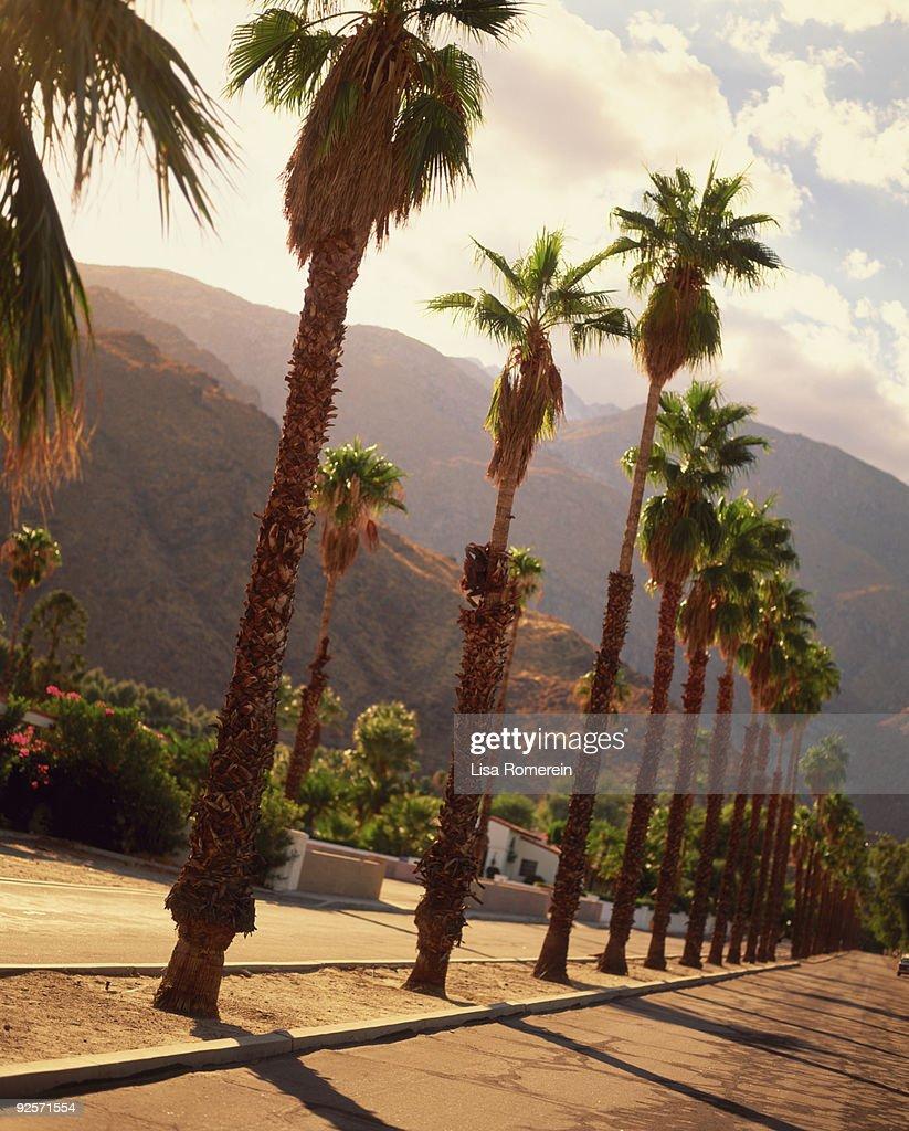 Row of palm trees