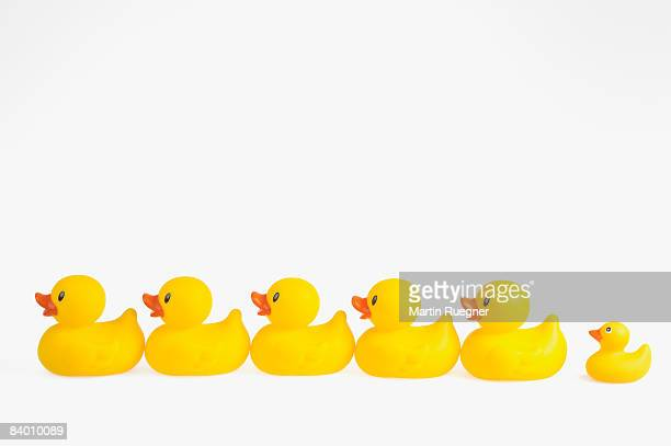 Row of rubber ducks.