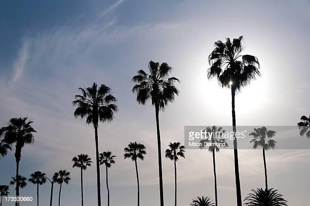 Row of Sunset palms
