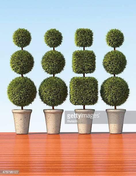 Row of topiaries